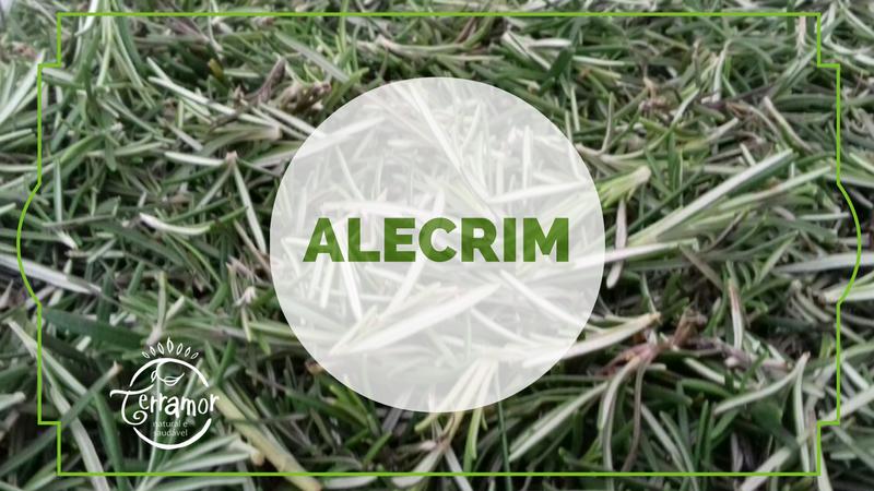 Veja aqui 7 benefícios do Alecrim!
